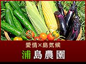 愛情×島気候 浦島農園